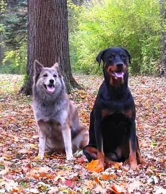 Denali and Laila