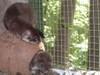 Weaselscoconut