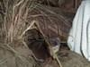 Weaselsmallcoconut